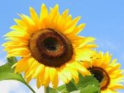 Магазин семян,  средств защиты растений,  удобрений